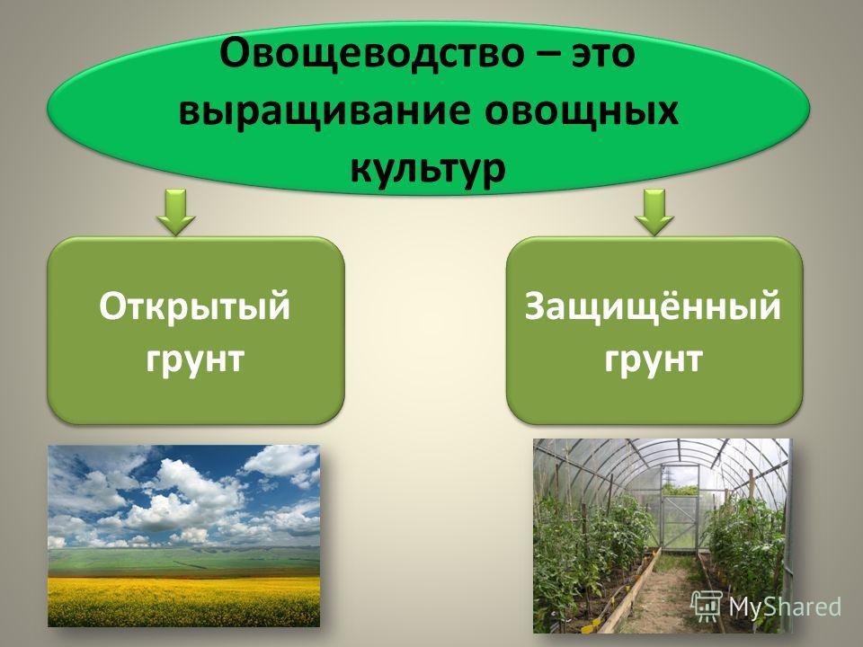Овощеводство – это выращивание овощных культур Открытый грунт Защищённый грунт