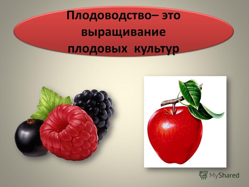 Плодоводство– это выращивание плодовых культур