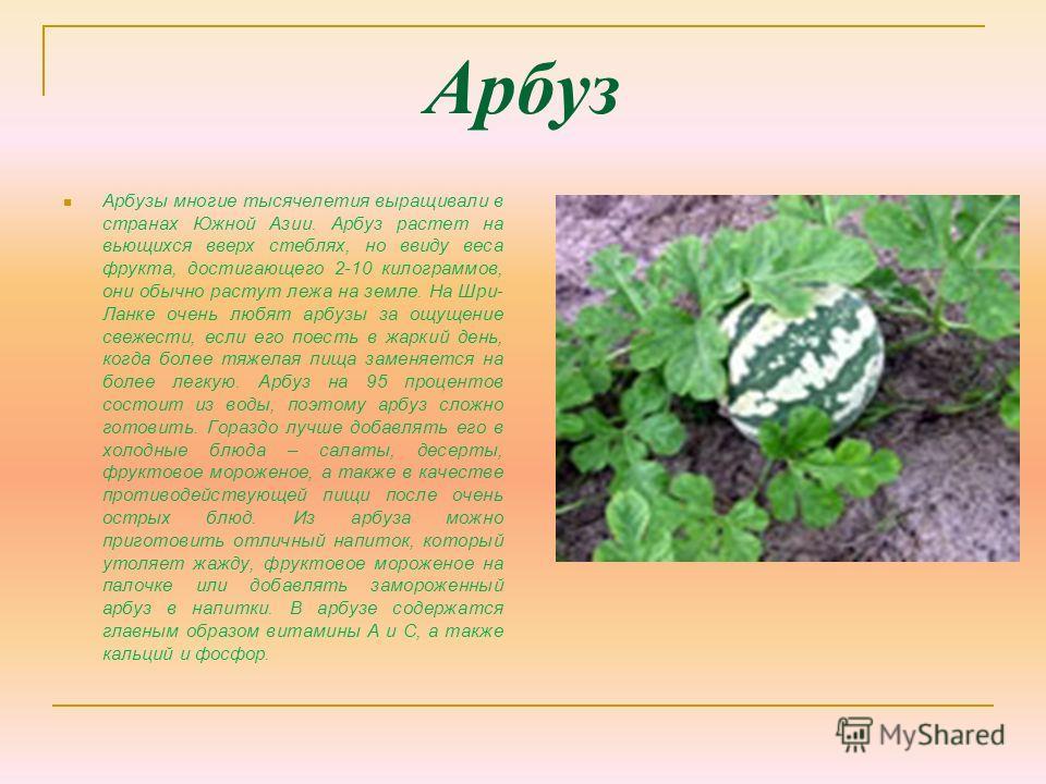 Арбуз Арбузы многие тысячелетия выращивали в странах Южной Азии. Арбуз растет на вьющихся вверх стеблях, но ввиду веса фрукта, достигающего 2-10 килограммов, они обычно растут лежа на земле. На Шри- Ланке очень любят арбузы за ощущение свежести, если