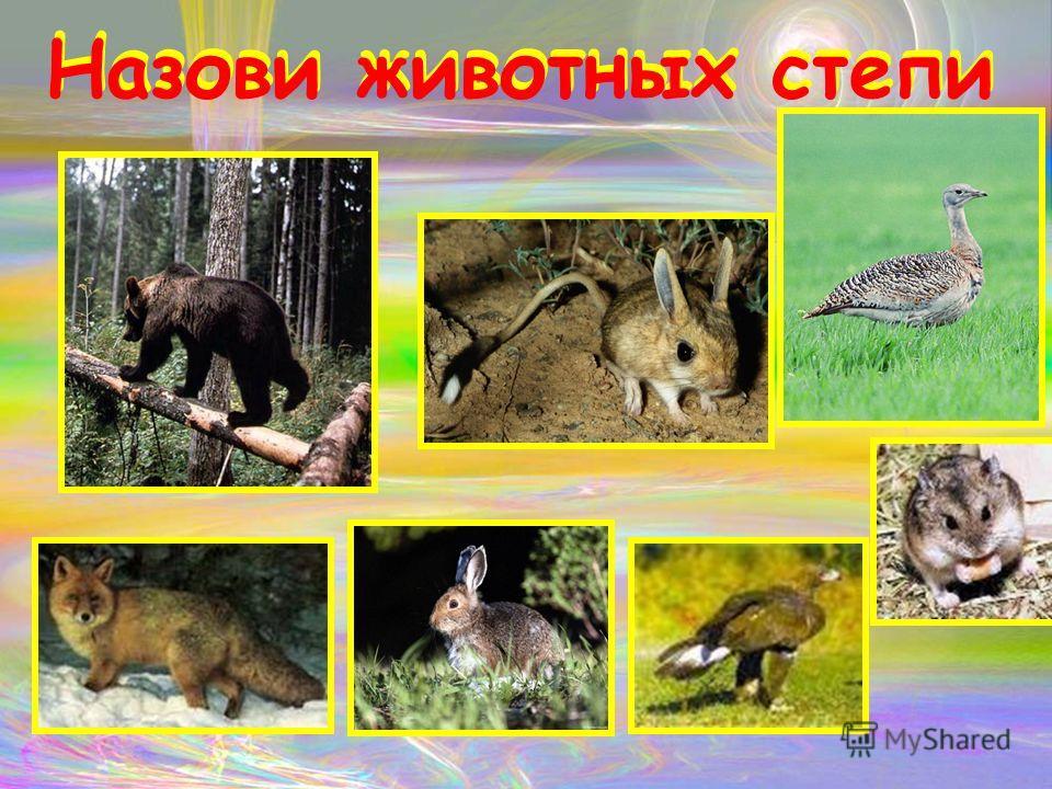 Назови животных степи Назови животных степи