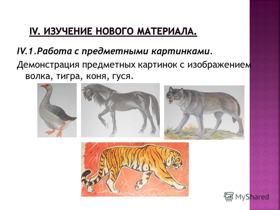 IV.1.Работа с предметными картинками. Демонстрация предметных картинок с изображением волка, тигра, коня, гуся.