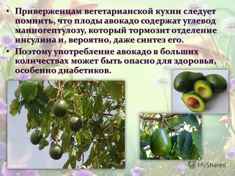 Приверженцам вегетарианской кухни следует помнить, что плоды авокадо содержат углевод манногептулозу, который тормозит отделение инсулина и, вероятно, даже синтез его. Приверженцам вегетарианской кухни следует помнить, что плоды авокадо содержат угле