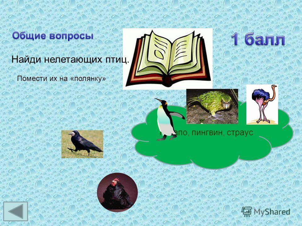 Найди нелетающих птиц. Помести их на «полянку» Какапо, пингвин, страус