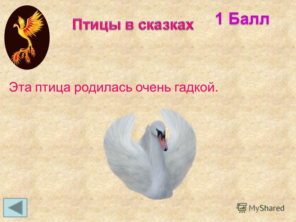 Эта птица родилась очень гадкой. 1 Балл