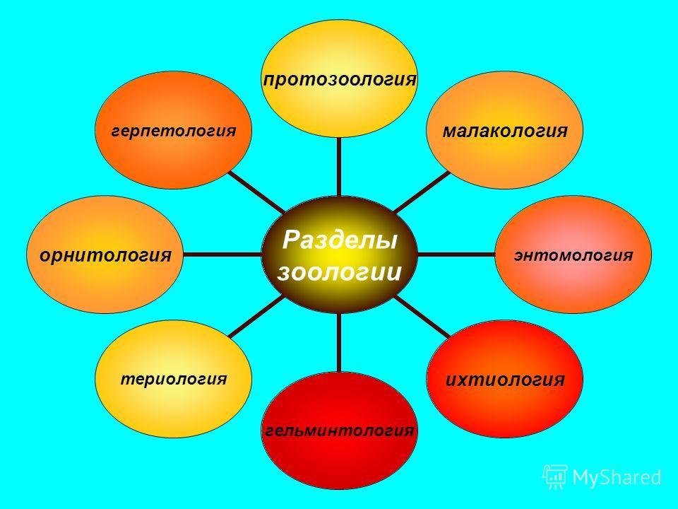 Разделы зоологии протозоологиямалакологияэнтомологияихтиологиягельминтологиятериологияорнитологиягерпетология