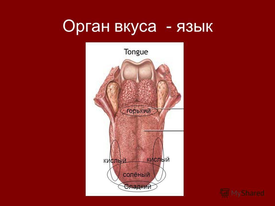 Орган вкуса - язык Сладкий горький кислый солёный