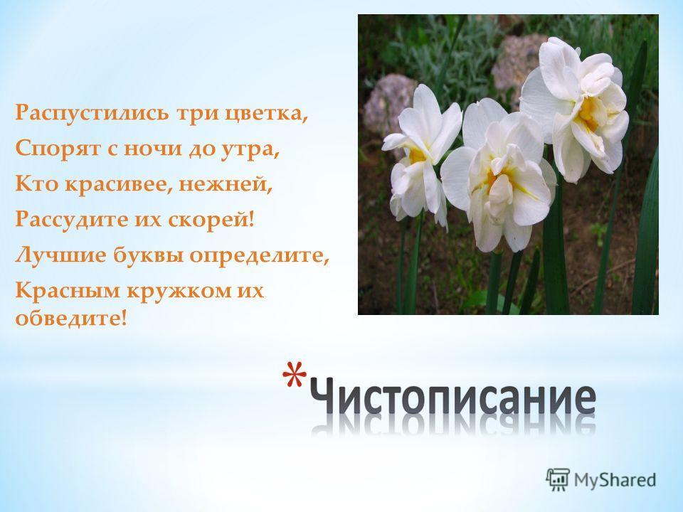 Распустились три цветка, Спорят с ночи до утра, Кто красивее, нежней, Рассудите их скорей! Лучшие буквы определите, Красным кружком их обведите!