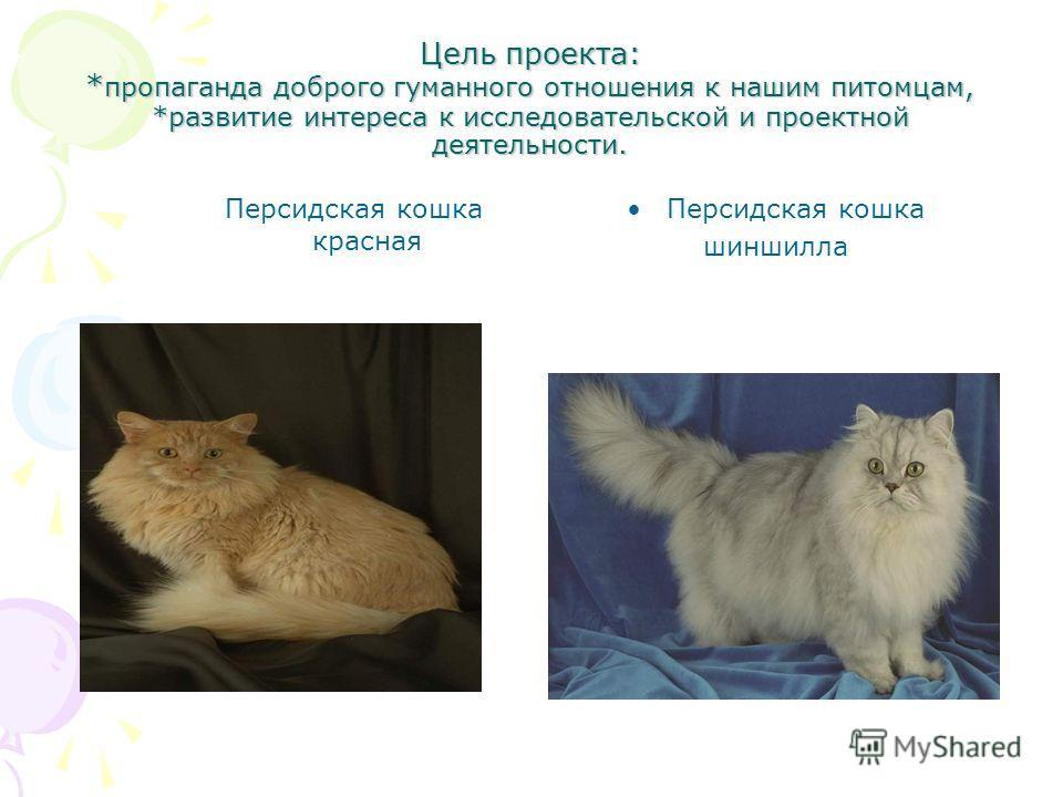 Цель проекта: * пропаганда доброго гуманного отношения к нашим питомцам, *развитие интереса к исследовательской и проектной деятельности. Персидская кошка красная Персидская кошка шиншилла
