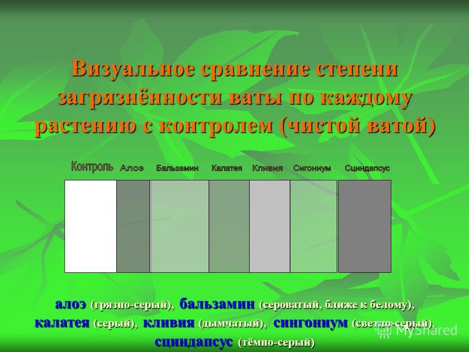Визуальное сравнение степени загрязнённости ваты по каждому растению с контролем (чистой ватой) алоэ (грязно-серый), бальзамин (сероватый, ближе к белому), калатея (серый), кливия (дымчатый), сингониум (светло-серый), сциндапсус (тёмно-серый)