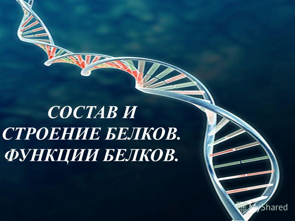 СОСТАВ И СТРОЕНИЕ БЕЛКОВ. ФУНКЦИИ БЕЛКОВ.