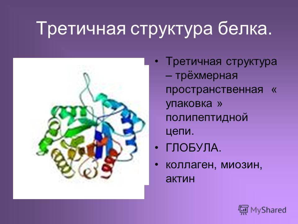 Третичная структура белка. Третичная структура – трёхмерная пространственная « упаковка » полипептидной цепи. ГЛОБУЛА. коллаген, миозин, актин