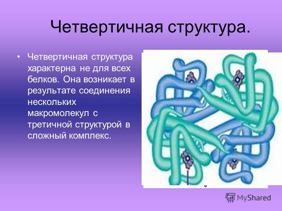 Четвертичная структура. Четвертичная структура характерна не для всех белков. Она возникает в результате соединения нескольких макромолекул с третичной структурой в сложный комплекс.