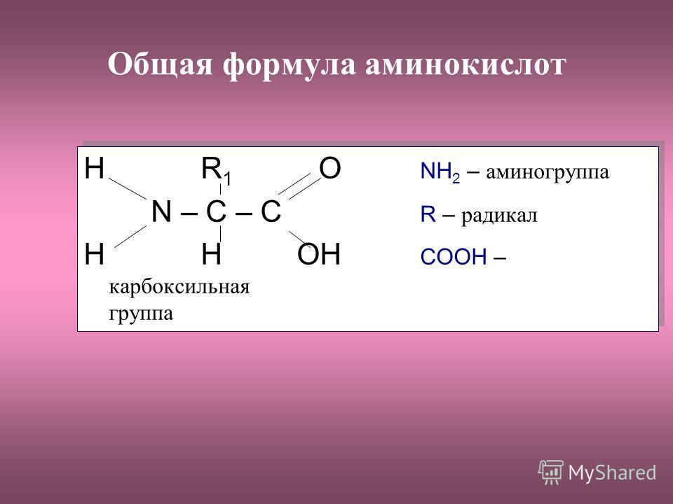Общая формула аминокислот H R 1 O NH 2 – аминогруппа N – C – C R – радикал H H OH COOH – карбоксильная группа H R 1 O NH 2 – аминогруппа N – C – C R – радикал H H OH COOH – карбоксильная группа