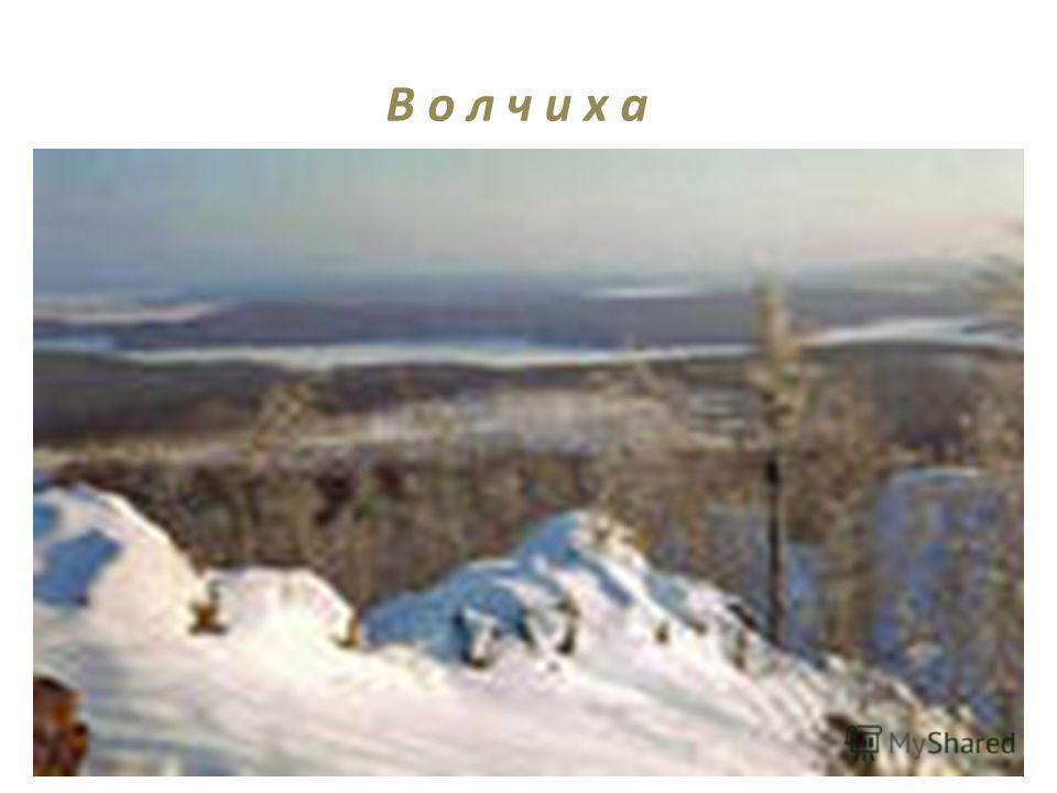 В о л ч и х а Волчиха, наиболее высокая гора по близости Екатеринбурга (высота 526м). Гора расположена около г. Первоуральска и г. Ревда. Скалистая вершина Волчихи возвышается над лесом. В сторону Ревды и Первоуарльска, в безветренную погоду, долина