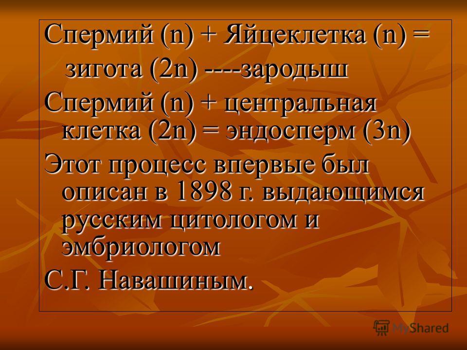 Спермий (n) + Яйцеклетка (n) = зигота (2n) ----зародыш зигота (2n) ----зародыш Спермий (n) + центральная клетка (2n) = эндосперм (3n) Этот процесс впервые был описан в 1898 г. выдающимся русским цитологом и эмбриологом С.Г. Навашиным.