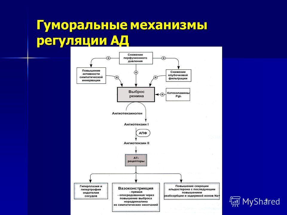 8 Гуморальные механизмы регуляции АД