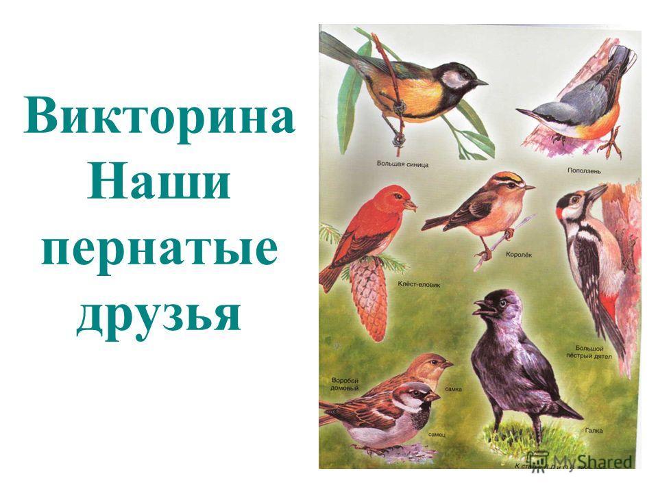 Викторина Наши пернатые друзья