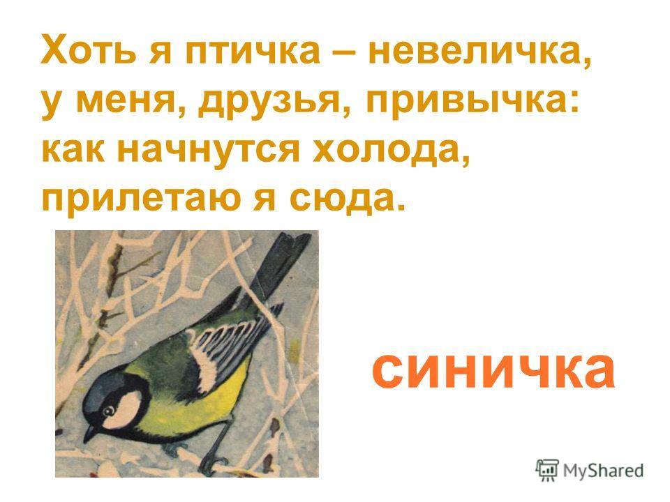 Хоть я птичка – невеличка, у меня, друзья, привычка: как начнутся холода, прилетаю я сюда. синичка
