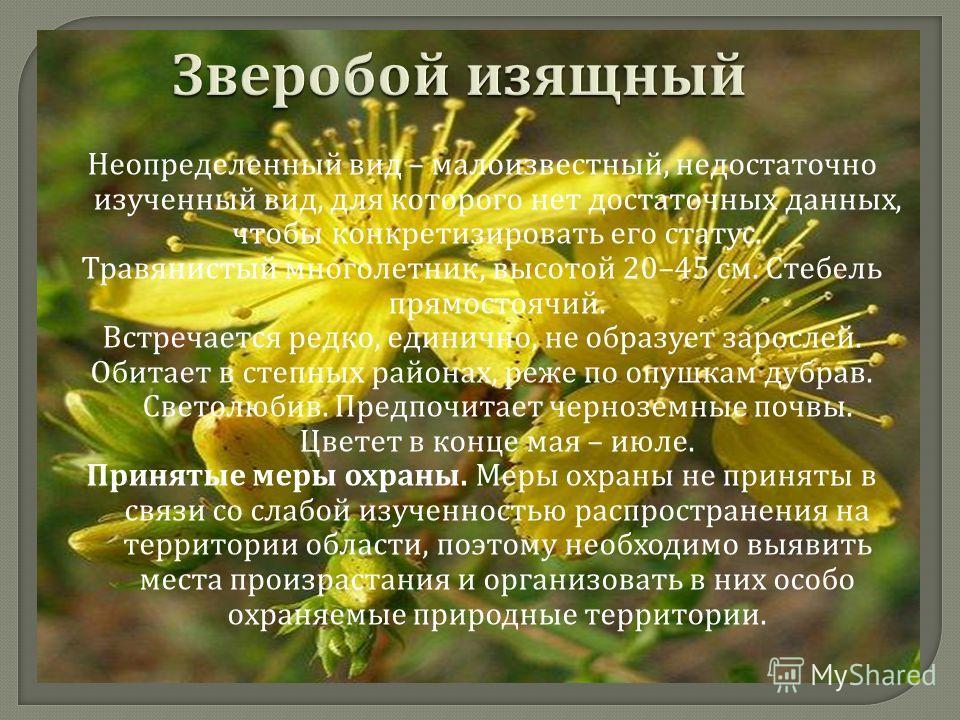 Уязвимый вид, численность которого быстро сокращается. Травянистый многолетник. Стебли одиночные, прямостоячие, 50–140 см высотой. Цветки светло - желтые. Вид встречается изредка, численность его невелика и имеет тенденцию к снижению. Растет на степн