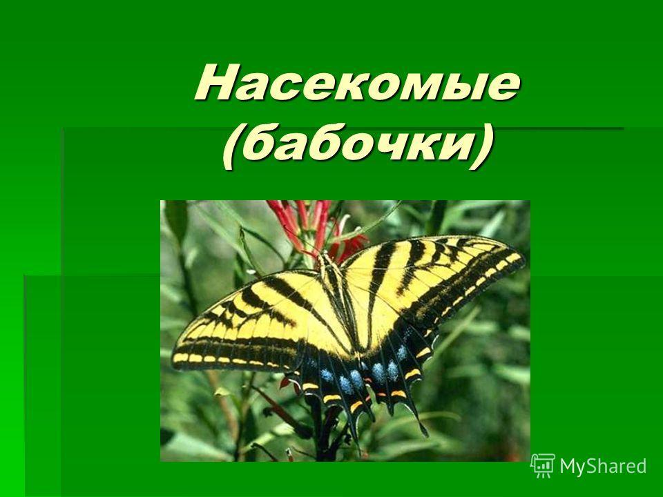 Насекомые (бабочки)