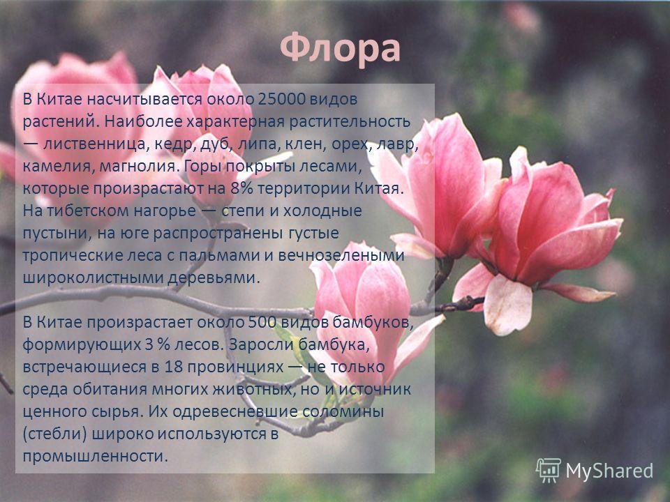 Флора В Китае насчитывается около 25000 видов растений. Наиболее характерная растительность лиственница, кедр, дуб, липа, клен, орех, лавр, камелия, магнолия. Горы покрыты лесами, которые произрастают на 8% территории Китая. На тибетском нагорье степ