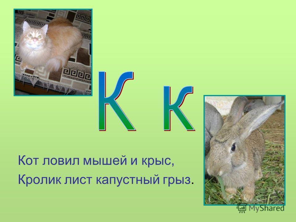 Кот ловил мышей и крыс, Кролик лист капустный грыз.