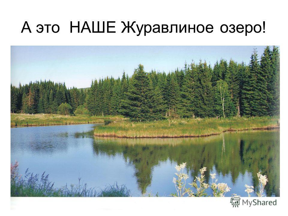 А это НАШЕ Журавлиное озеро!