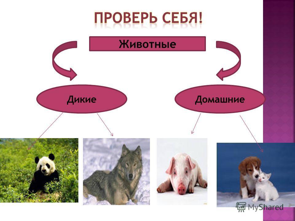 Животные ДикиеДомашние