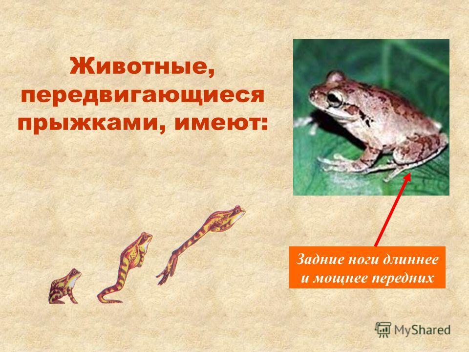 Животные, передвигающиеся прыжками, имеют: Задние ноги длиннее и мощнее передних