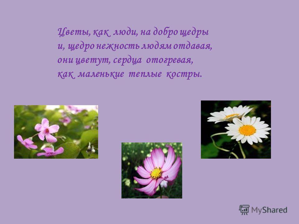 Цветы, как люди, на добро щедры и, щедро нежность людям отдавая, они цветут, сердца отогревая, как маленькие теплые костры.