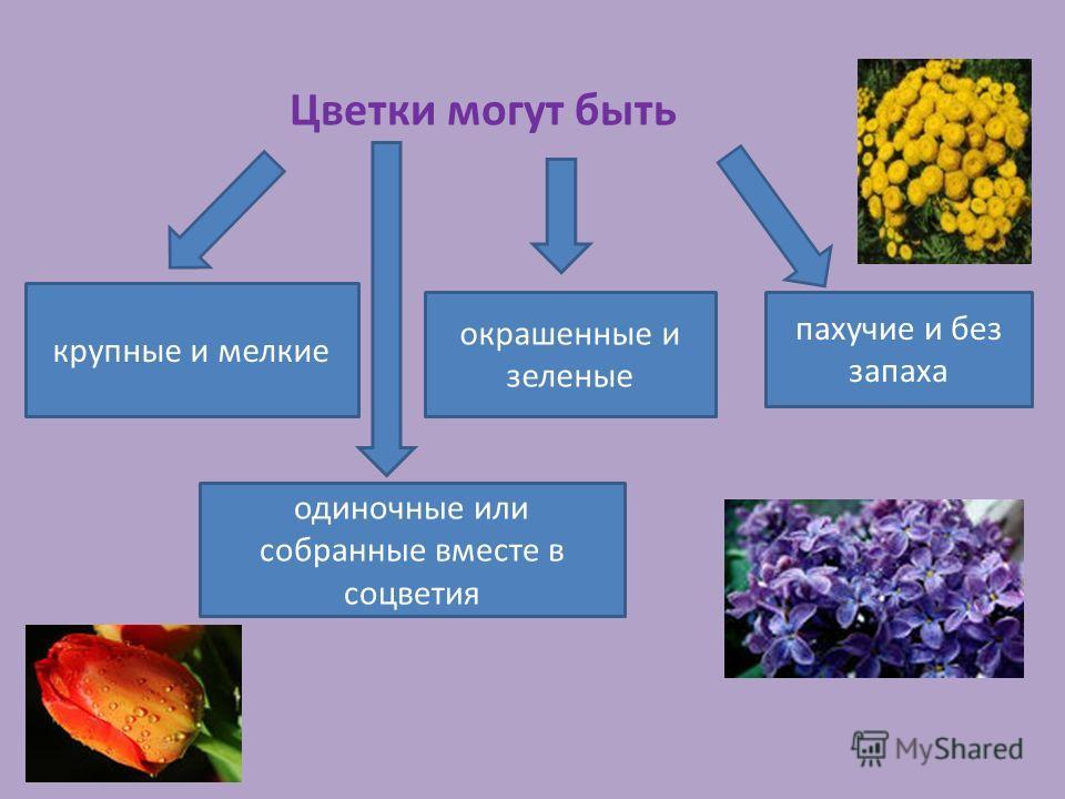 Цветки могут быть крупные и мелкие окрашенные и зеленые пахучие и без запаха одиночные или собранные вместе в соцветия