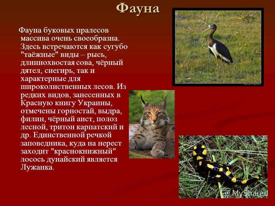 Фауна Фауна буковых пралесов массива очень своеобразна. Здесь встречаются как сугубо