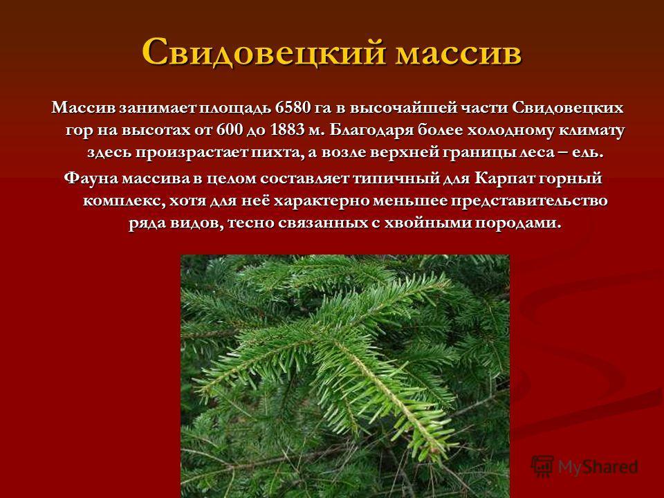Свидовецкий массив Массив занимает площадь 6580 га в высочайшей части Свидовецких гор на высотах от 600 до 1883 м. Благодаря более холодному климату здесь произрастает пихта, а возле верхней границы леса – ель. Массив занимает площадь 6580 га в высоч