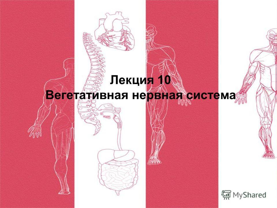 Лекция 10 Вегетативная нервная система