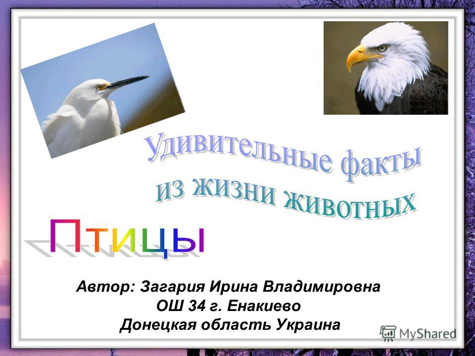 Автор: Загария Ирина Владимировна ОШ 34 г. Енакиево Донецкая область Украина