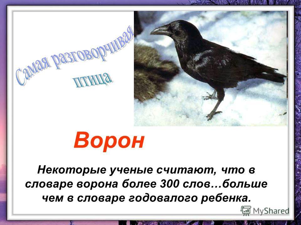 Некоторые ученые считают, что в словаре ворона более 300 слов…больше чем в словаре годовалого ребенка. Ворон