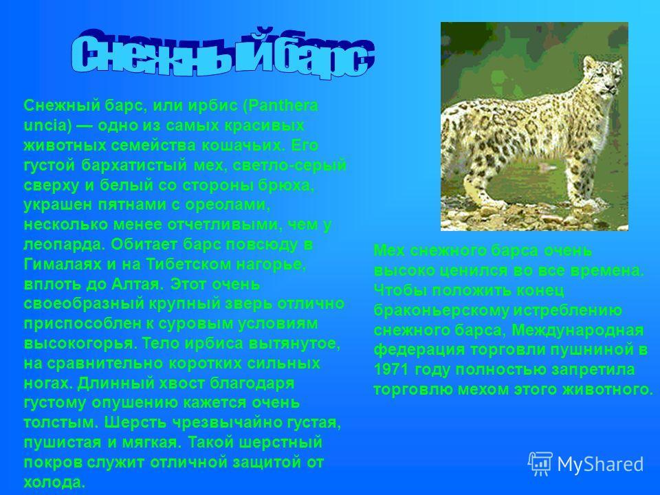 Снежный барс, или ирбис (Panthera uncia) одно из самых красивых животных семейства кошачьих. Его густой бархатистый мех, светло-серый сверху и белый со стороны брюха, украшен пятнами с ореолами, несколько менее отчетливыми, чем у леопарда. Обитает ба