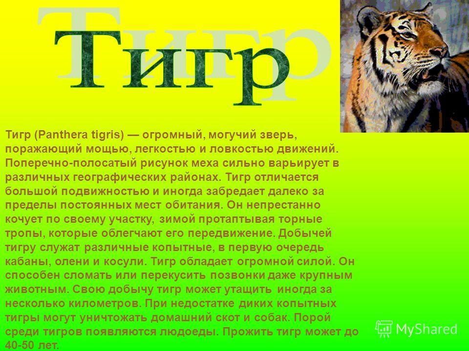 Тигр (Panthera tigris) огромный, могучий зверь, поражающий мощью, легкостью и ловкостью движений. Поперечно-полосатый рисунок меха сильно варьирует в различных географических районах. Тигр отличается большой подвижностью и иногда забредает далеко за