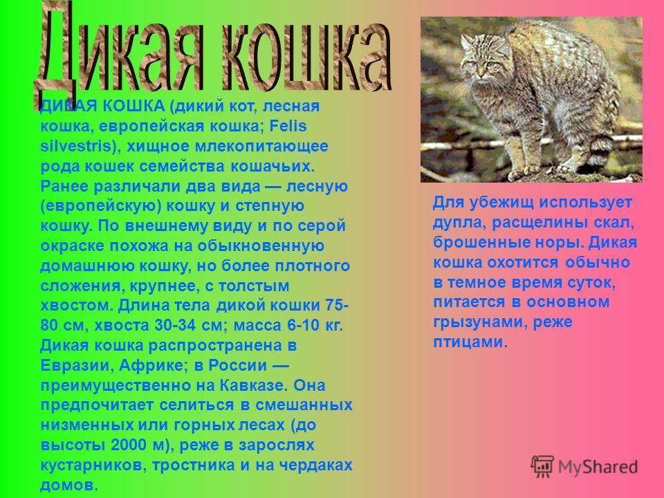 ДИКАЯ КОШКА (дикий кот, лесная кошка, европейская кошка; Felis silvestris), хищное млекопитающее рода кошек семейства кошачьих. Ранее различали два вида лесную (европейскую) кошку и степную кошку. По внешнему виду и по серой окраске похожа на обыкнов