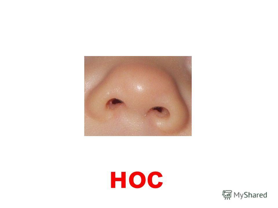 картинки носа для детей детского сада