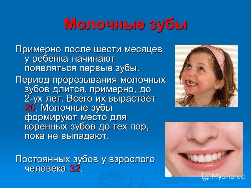 Молочные зубы Примерно после шести месяцев у ребенка начинают появляться первые зубы. Период прорезывания молочных зубов длится, примерно, до 2-ух лет. Всего их вырастает 20. Молочные зубы формируют место для коренных зубов до тех пор, пока не выпада