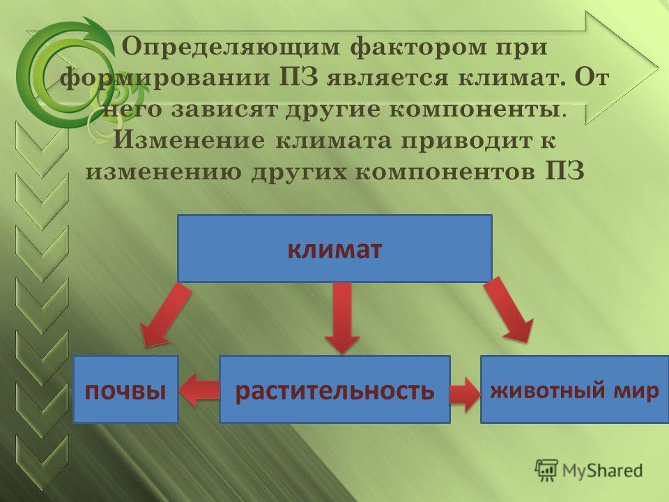 Определяющим фактором при формировании ПЗ является климат. От него зависят другие компоненты. Изменение климата приводит к изменению других компонентов ПЗ климат почвырастительность животный мир
