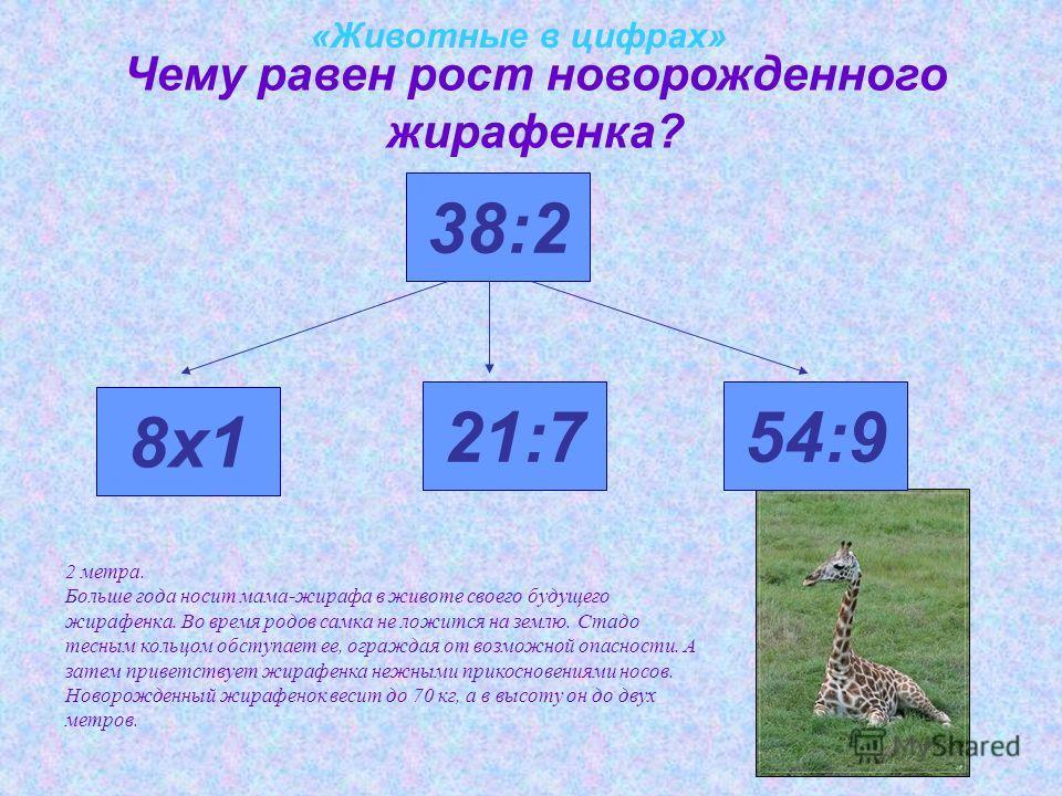 «Животные в цифрах» Чему равен рост новорожденного жирафенка? 8х1 38:2 21:754:9 2 метра. Больше года носит мама-жирафа в животе своего будущего жирафенка. Во время родов самка не ложится на землю. Стадо тесным кольцом обступает ее, ограждая от возмож
