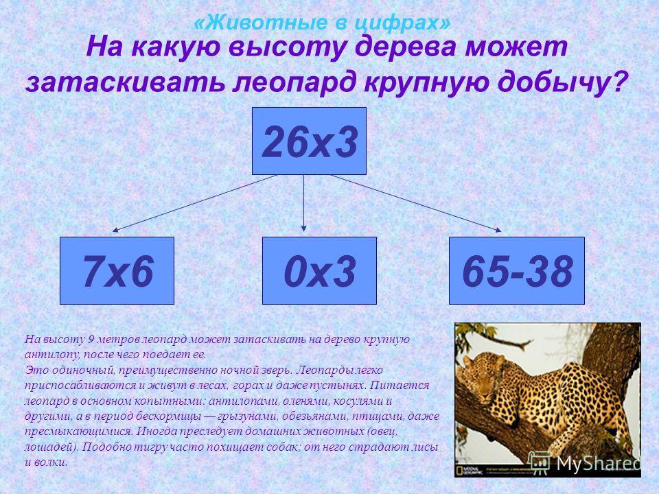 «Животные в цифрах» На какую высоту дерева может затаскивать леопард крупную добычу? 26х3 7х60х365-38 На высоту 9 метров леопард может затаскивать на дерево крупную антилопу, после чего поедает ее. Это одиночный, преимущественно ночной зверь. Леопард