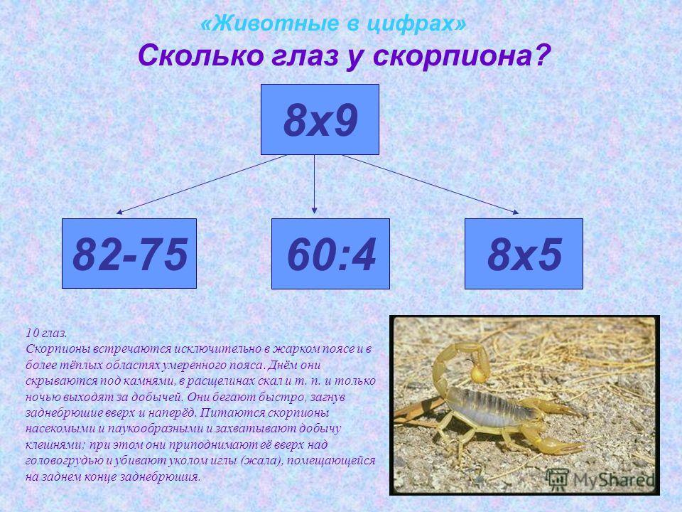 «Животные в цифрах» Сколько глаз у скорпиона? 82-75 8х9 60:48х5 10 глаз. Скорпионы встречаются исключительно в жарком поясе и в более тёплых областях умеренного пояса. Днём они скрываются под камнями, в расщелинах скал и т. п. и только ночью выходят