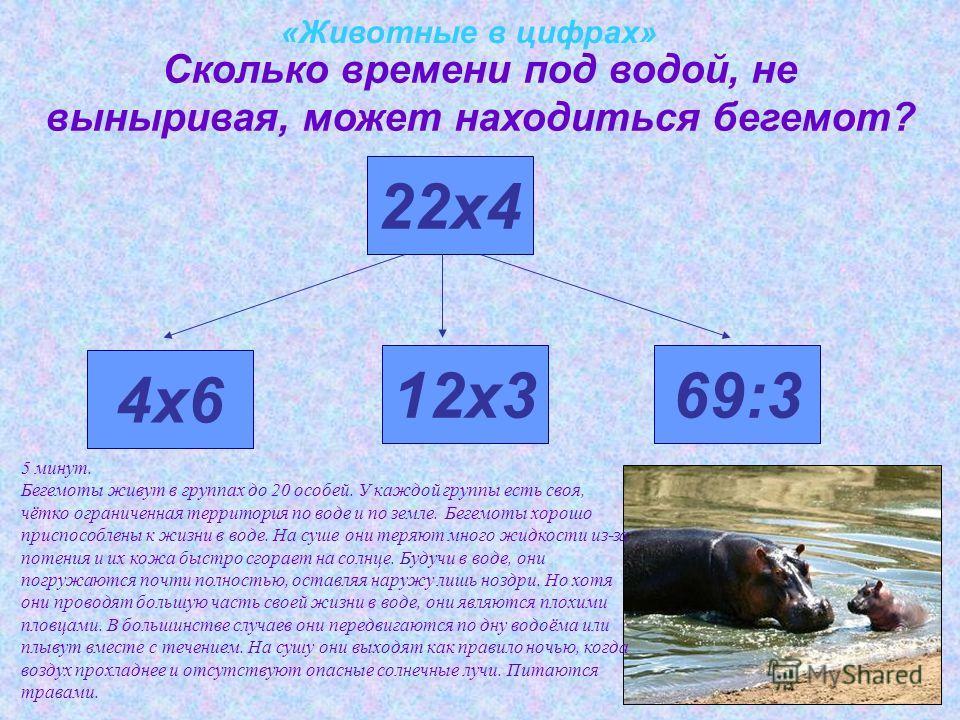 «Животные в цифрах» Сколько времени под водой, не выныривая, может находиться бегемот? 4х6 22х4 12х369:3 5 минут. Бегемоты живут в группах до 20 особей. У каждой группы есть своя, чётко ограниченная территория по воде и по земле. Бегемоты хорошо прис