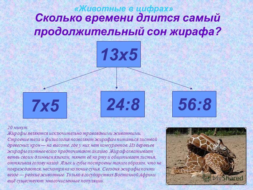 «Животные в цифрах» Сколько времени длится самый продолжительный сон жирафа? 7х5 13х5 24:856:8 20 минут. Жирафы являются исключительно травоядными животными. Строение тела и физиология позволяют жирафам питаться листвой древесных крон на высоте, где