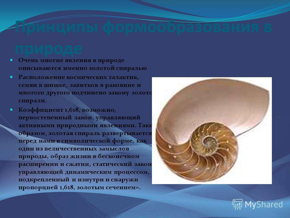 Принципы формообразования в природе Очень многие явления в природе описываются именно золотой спиралью Расположение космических галактик, семян в шишке, завитков в раковине и многого другого подчинено закону золотой спирали. Коэффициент 1,618, возмож