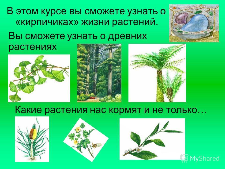 В этом курсе вы сможете узнать о «кирпичиках» жизни растений. Вы сможете узнать о древних растениях Какие растения нас кормят и не только…