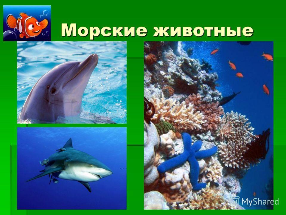 Морские животные Морские животные